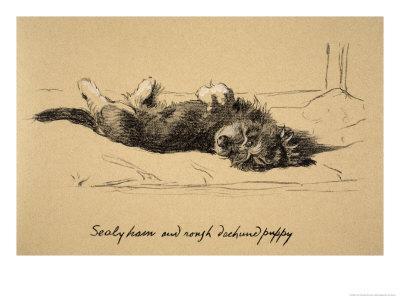 Rough Daschund Puppy Detail, 1930, IllJust Among Friends, Aldin, Cecil Charles Windsor