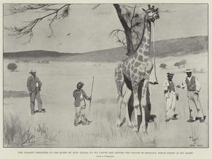 The Giraffe Presented to the Queen by King Khama on its Native Soil before the Voyage to England by Cecil Aldin