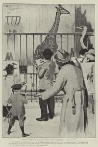 The New Giraffe at the Zoological Society's Gardens, Regent's Park, Artists on Duty by Cecil Aldin