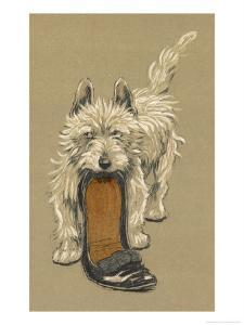 White Scots Terrier with a Black Slipper or Shoe by Cecil Aldin