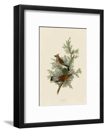 Cedar Bird-John James Audubon-Framed Art Print