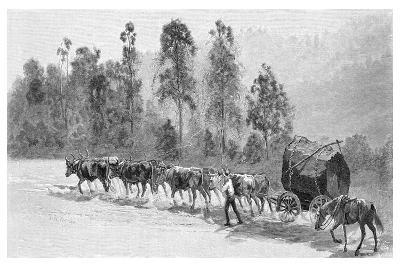 Cedar-Getting on the Richmond River, New South Wales, Australia, 1886-JR Ashton-Giclee Print