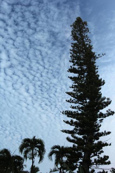 Cedar Palm Sky Vertical-Robert Goldwitz-Photographic Print