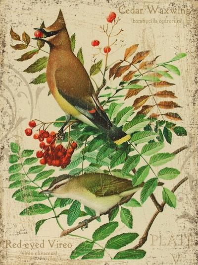 Cedar Waxwing-Kate Ward Thacker-Giclee Print
