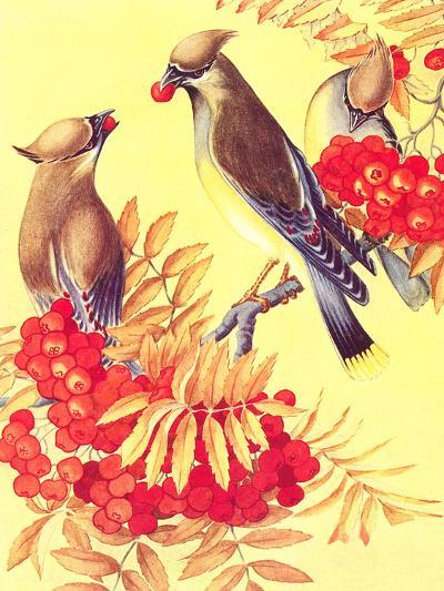 Cedar Waxwings-Found Image Press-Art Print