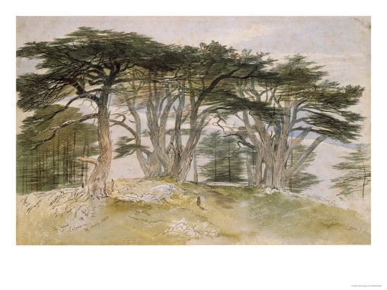 Cedars of Lebanon-Edward Lear-Giclee Print