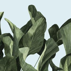 Celadon Palms II