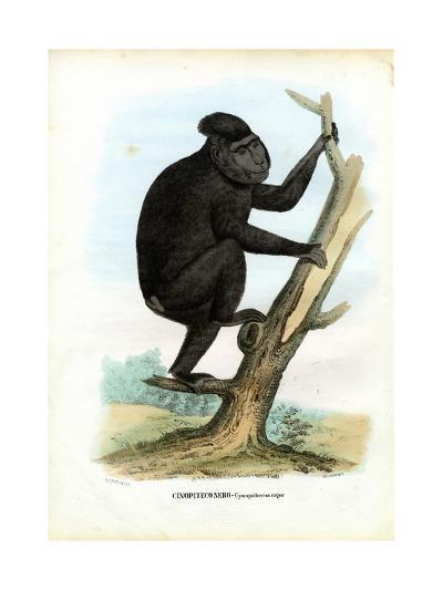 Celebes Ape, 1863-79-Raimundo Petraroja-Giclee Print