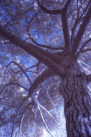 https://imgc.artprintimages.com/img/print/celebration-tree-infrared-oakland-california_u-l-pq7uia0.jpg?p=0