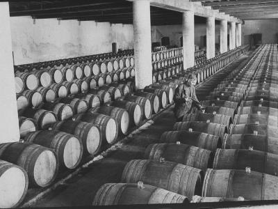 Cellar of Maturing Wines as Wine Maker Tests with Pipette-Carlo Bavagnoli-Photographic Print