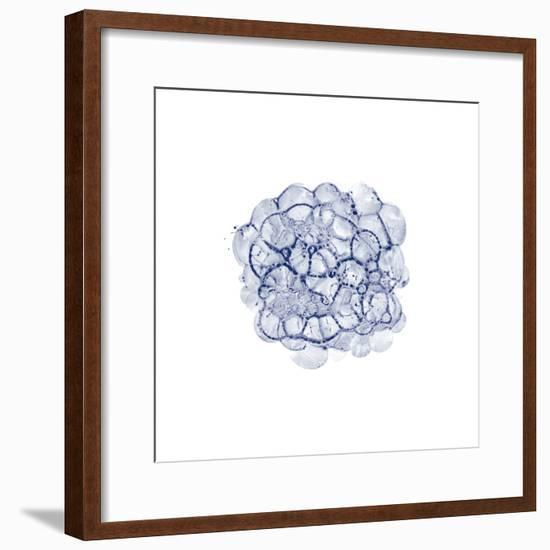 Cellular Clouds in Midnight C-THE Studio-Framed Premium Giclee Print