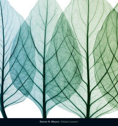 https://imgc.artprintimages.com/img/print/celosia-leaves-i_u-l-f5nqv80.jpg?p=0