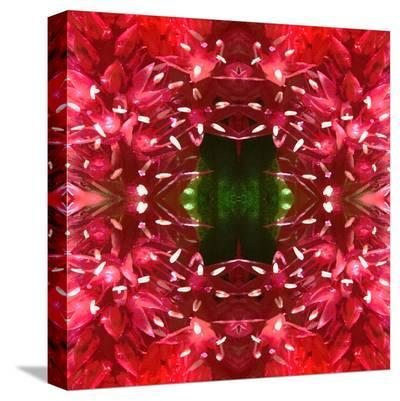 Celosia-Rose Anne Colavito-Stretched Canvas Print