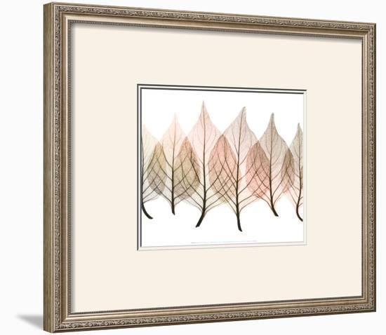 Celosias-Steven N. Meyers-Framed Art Print