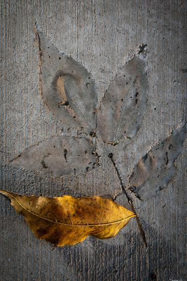 Cement Autumn 1295-Gordon Semmens-Photographic Print