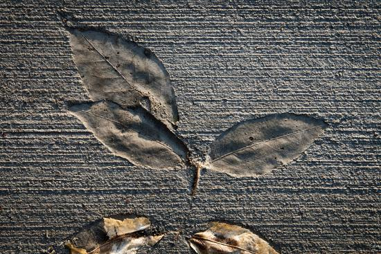Cement Autumn 1335-Gordon Semmens-Photographic Print