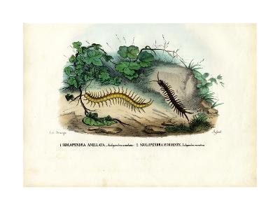 Centipede, 1863-79-Raimundo Petraroja-Giclee Print