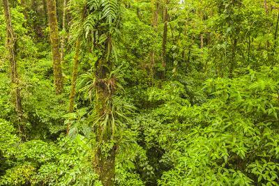 Central America, Costa Rica, Arenal. Rain Forest Foliage-Jaynes Gallery-Photographic Print