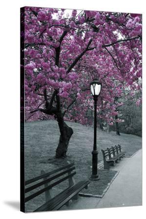 Central Park-Blossom