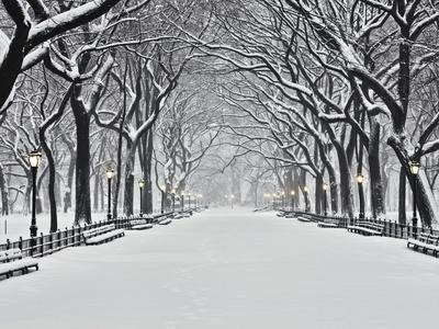 https://imgc.artprintimages.com/img/print/central-park-in-winter_u-l-pzlfsa0.jpg?p=0