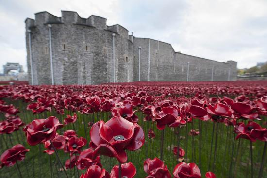 Ceramic poppies at the Tower of London-Associated Newspapers-Photo