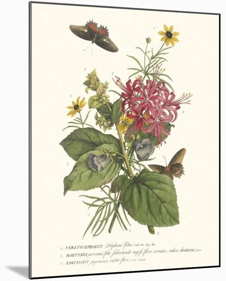 Ceratocephamus, Martynia and Narcissus-Georg Ehret-Mounted Giclee Print
