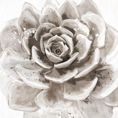 https://imgc.artprintimages.com/img/print/cereus-sempervivum-fawn_u-l-f8ulri0.jpg?p=0