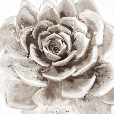 Cereus Sempervivum - Fawn-Tania Bello-Art Print