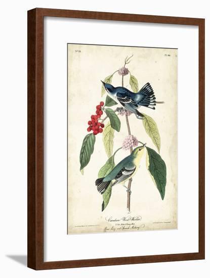 Cerulean Wood Warbler-John James Audubon-Framed Art Print