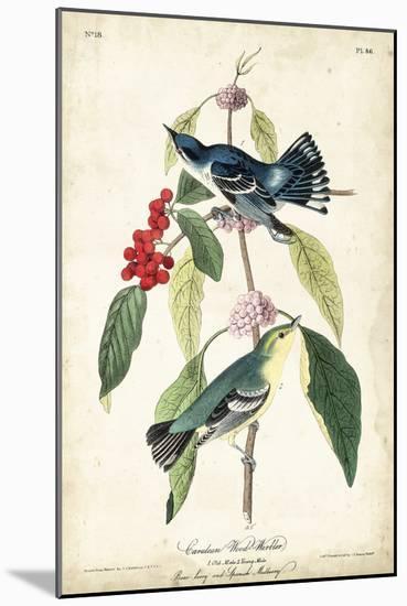 Cerulean Wood Warbler-John James Audubon-Mounted Art Print