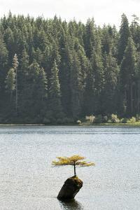 A Lone Tree in a Lake by Cesare Naldi