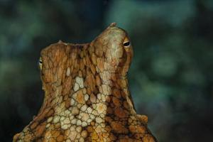 The Eyes of an Octopus by Cesare Naldi