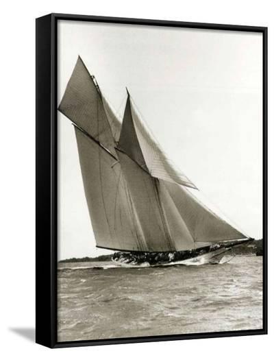 Cetonia-Frank Beken-Framed Canvas Print