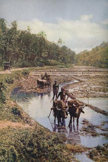 'Ceylon ...', c1920-Underwood-Photographic Print
