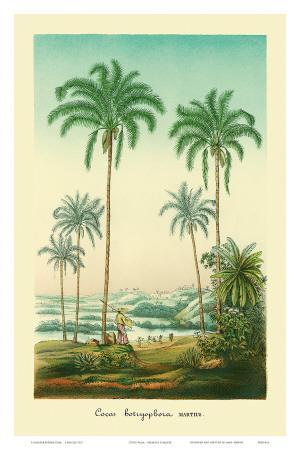 Coconut Palm Trees, 1854