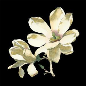 Midnight Magnolias I by Chabal Dussurgey
