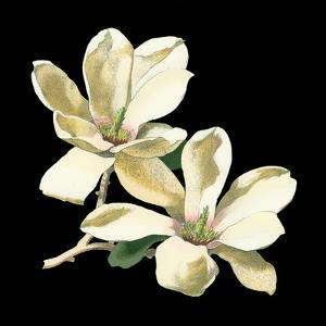 Midnight Magnolias II by Chabal Dussurgey