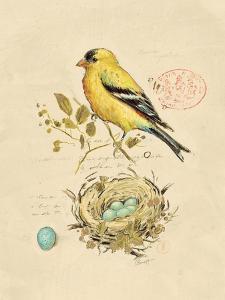 Gilded Songbird 2 by Chad Barrett