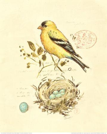 chad-barrett-gilded-songbird-ii