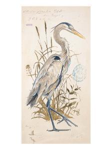Great Blue Heron by Chad Barrett