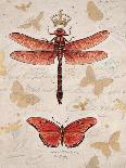 Nature's Curiosities 5-Chad Barrett-Art Print