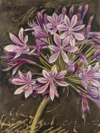Scripted Agapanthus