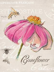 Sketchbook Coneflower by Chad Barrett