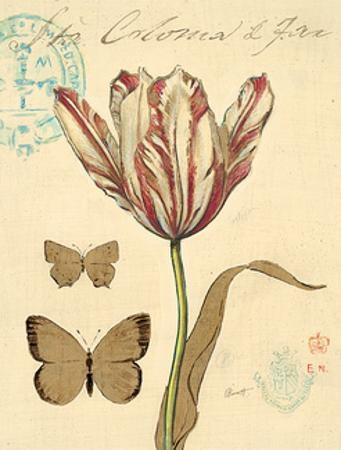 Tulip Curiosity