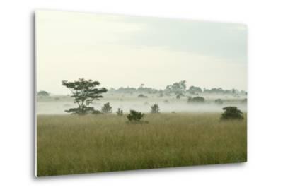 Fog Above Wild Grass on Oahu