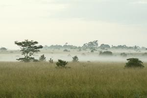 Fog Above Wild Grass on Oahu by Chad Copeland