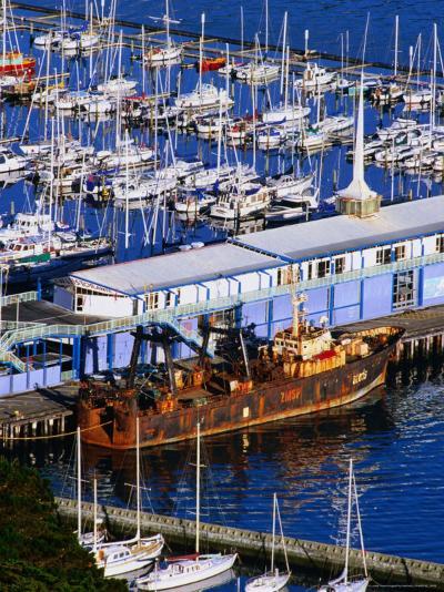 Chaeffers Marina at Oriental Bay, Wellington, Wellington, New Zealand-Paul Kennedy-Photographic Print