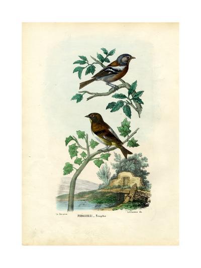 Chaffinch, 1863-79-Raimundo Petraroja-Giclee Print