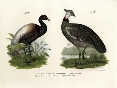 Chaja Bird, 1864--Giclee Print