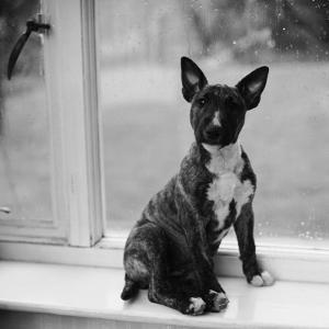 Doggy in the Window by Chaloner Woods